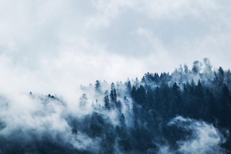 green-pine-trees-covered-with-fogs
