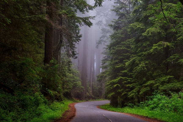 redwood-nemzeti-park-california