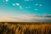 field-sky-nature-agriculture