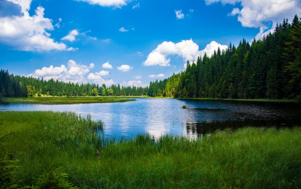 scenic-view-of-lake-in-forest