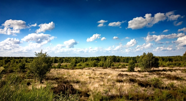 heide-drover-heath-nature-heather