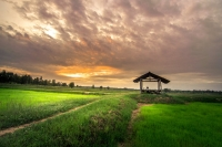 agriculture-clouds-country-countryside