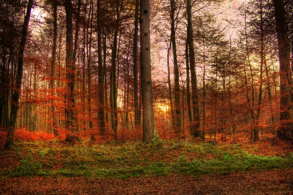 sunset-forest-sun-abendstimmung