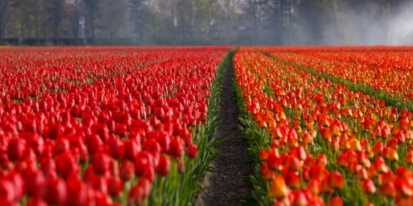 red-field-flowers-garden