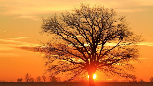 silhouette-bare-tree-against-sky-during-sunset